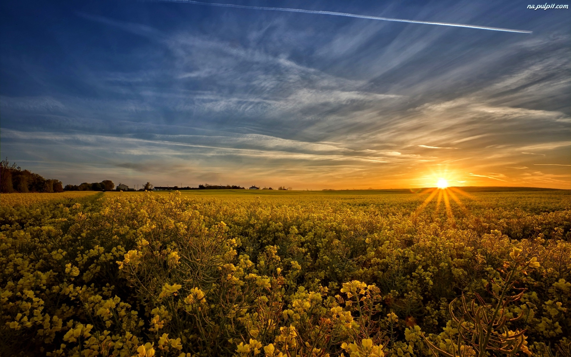 фото солнца утром